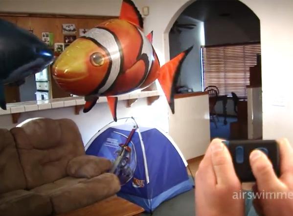Hai mai visto un pesce volare?